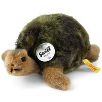 Sköldpadda Slo