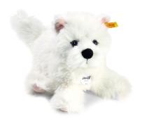 Hund Westie Sam