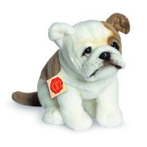 Hund: Engelsk bulldog